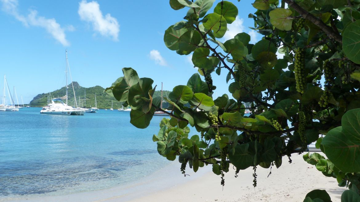 Plage de Carriacou, Grenade, Grenadines