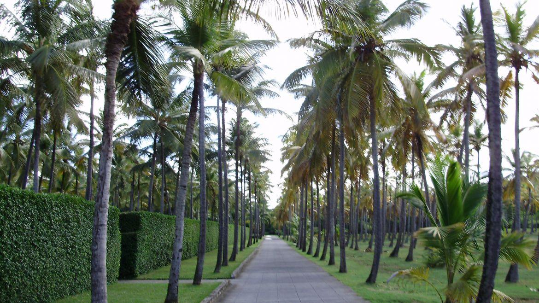 Palmeraie de l'ile Moustique- Grenadines