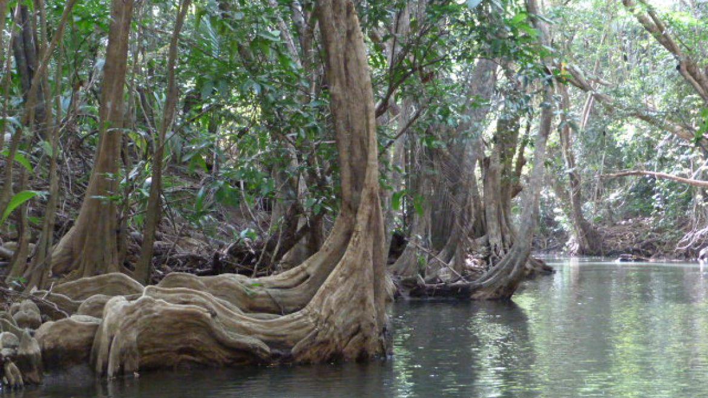 La rivière indienne, La Dominique
