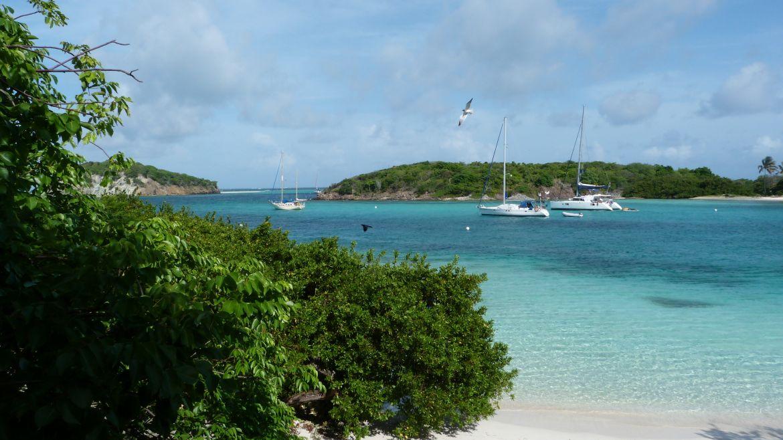Petit Rameau aux Tobago Cays - Grenadines