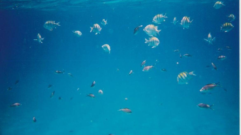 Le snorkelling aux Anses d'Arlet