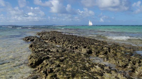 La barrière de corail