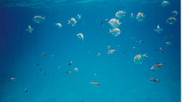 Snorkelling off the Anses d'Arlet